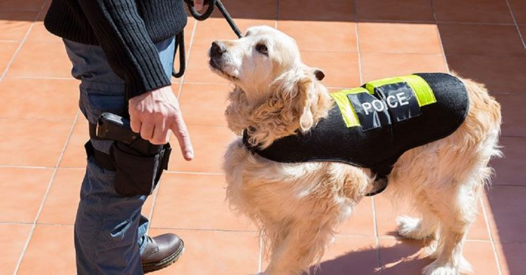 10 jobs dogs do that prove they are much more than just a